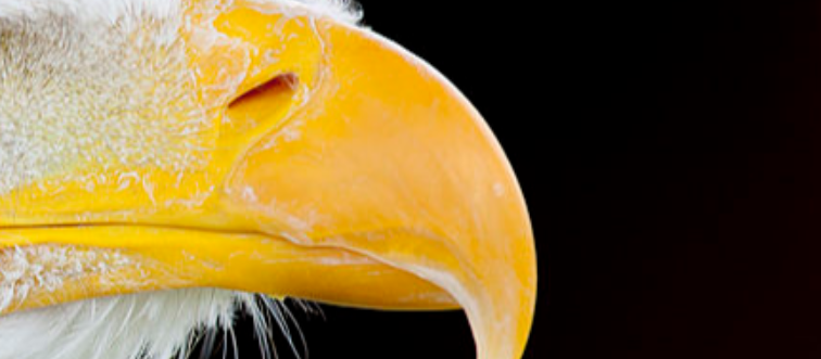 GettyImages-143194721 yellow beak