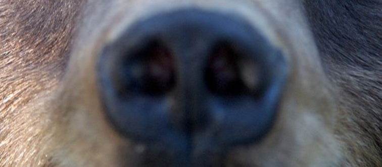 GettyImages-505990827 furry nose close up